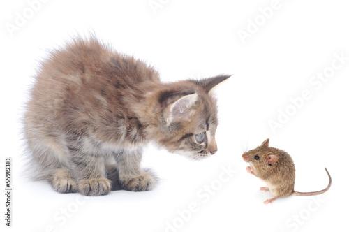 Keuken foto achterwand Kat Mouse and kitten