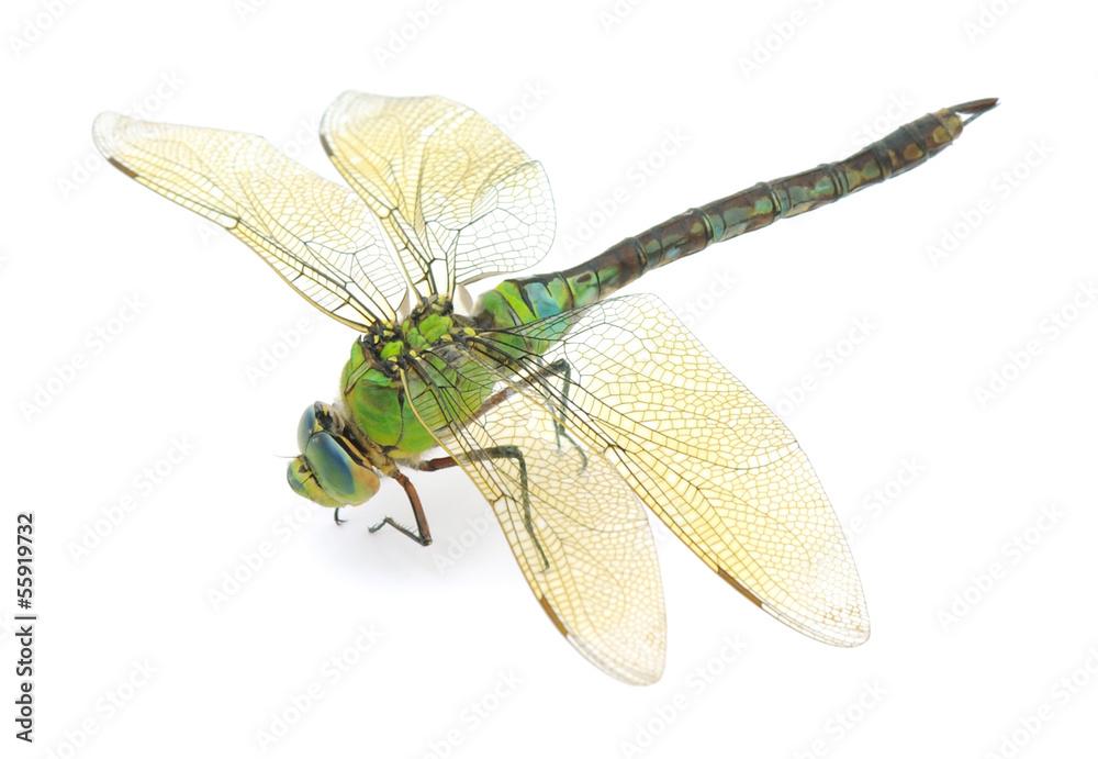Fotografía Dragonfly   Europosters.es