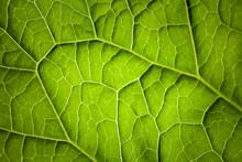 Nature Macro Photo Background ...