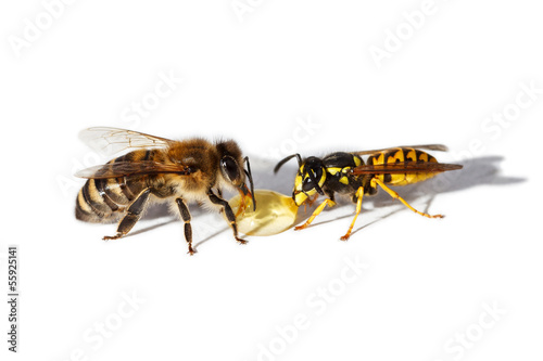 Bee and wasp Canvas-taulu