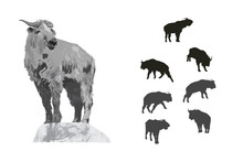 Illustration And Silhouette Set Of Takin