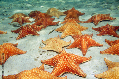 Sea stars on sandy ocean floor