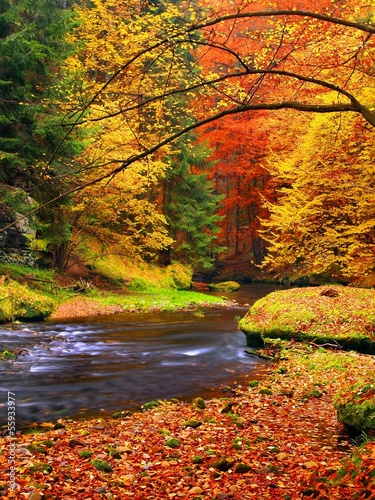 Canvas Prints Honey Autumn landscape, colorful leaves on trees, morning at river.