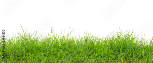 Foto auf Gartenposter Landschappen grass on white background