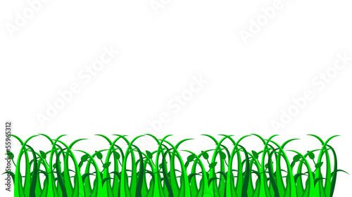 Fotografie, Obraz  Grass, vector
