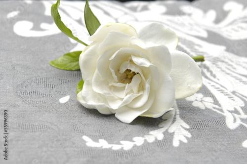 bialy-kwiat-gardenia-na-koronkowej-fakturze