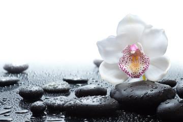 Fototapeta white orchid and wet black stones