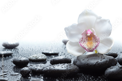 Foto op Canvas Orchidee white orchid and wet black stones