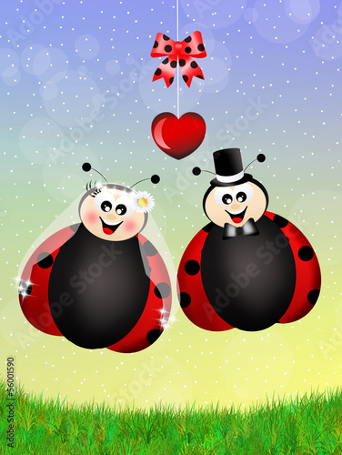 Foto op Canvas Lieveheersbeestjes Ladybugs in love