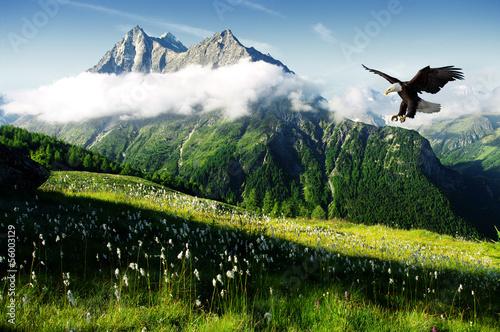 In de dag Eagle eagle in the Alps