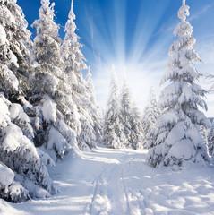 Plakat sonniger Winterwald
