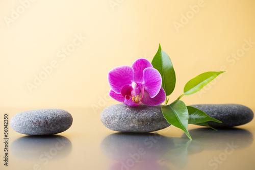 Fototapety, obrazy: Spa stones.