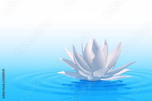 Fototapety, obrazy: Floating waterlily
