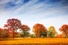 Autumn Trees Landscape, Fall S...