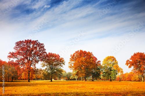 Autumn trees landscape, fall season Canvas Print