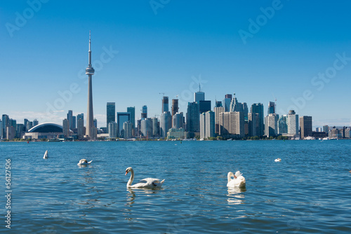 Photo  Toronto skyline with swans