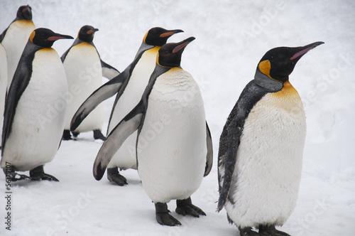 Foto op Canvas Pinguin 旭山動物園のペンギン