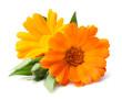 Leinwandbild Motiv Beauty marigold flowers