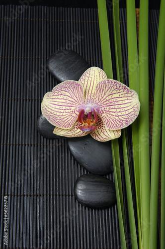 Fototapeta beautiful orchid and green plant on mat obraz
