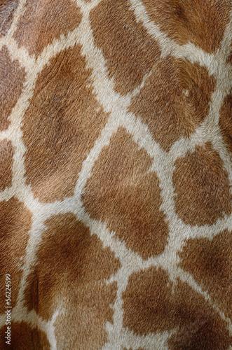 Photo  Giraffe skin