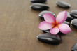 single frangipani with black stones on wooden board
