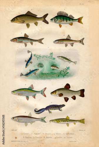 Fotografie, Tablou  Histoire naturelle : Fish