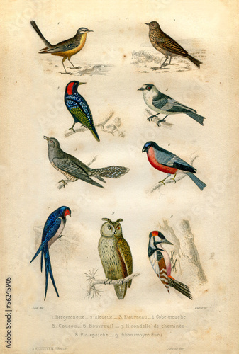 Natural history : Birds Poster