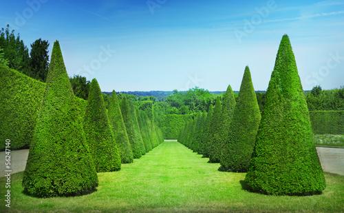 Topiary Fototapeta