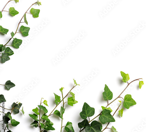 Valokuvatapetti frame of ivy
