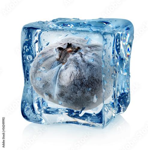 Staande foto In het ijs Blueberry in ice cube