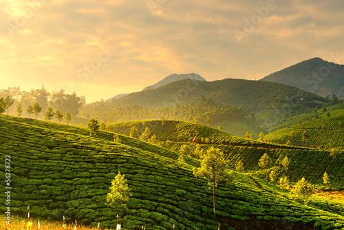 Carta da parati Tea plantations