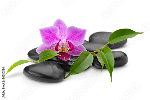 Poster Spa orchid