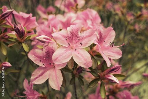 Detail Fleurs Jardin Japonais Buy This Stock Photo And Explore