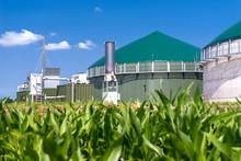 Biogasanlage Mit Maisfeld 3137