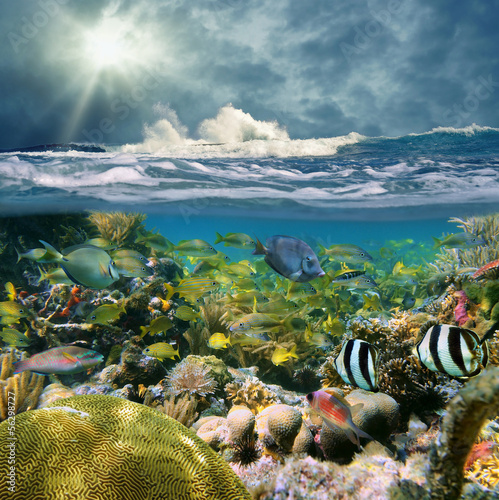 Split view with wave crashing and coral reef fish