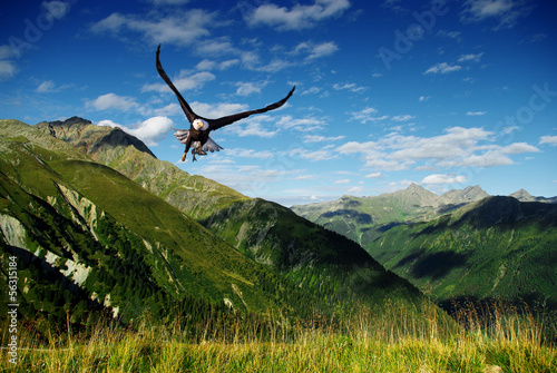 In de dag Eagle eagle flying above the mountains