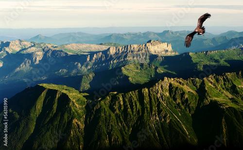In de dag Eagle flying above the Alps