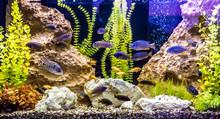 Ttropical Freshwater Aquarium ...