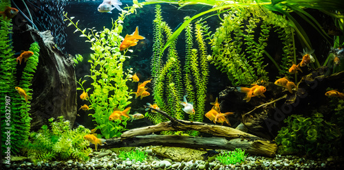 Ttropical freshwater aquarium with fishes #56327987