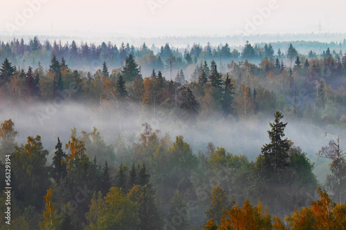 Canvas Prints Morning with fog Autumn forest