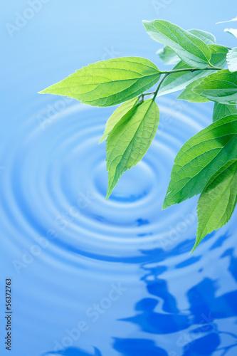 swieze-zielone-liscie