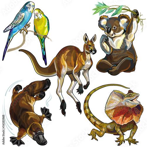 zestaw-z-dzikimi-zwierzetami-australii