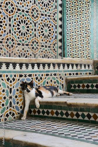 Spoed Foto op Canvas Marokko cat - maroc