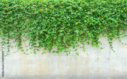 Fotografia ornamental plants on wall