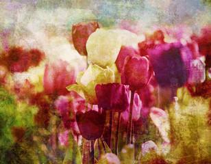 fototapeta tulipany nostalgiczne