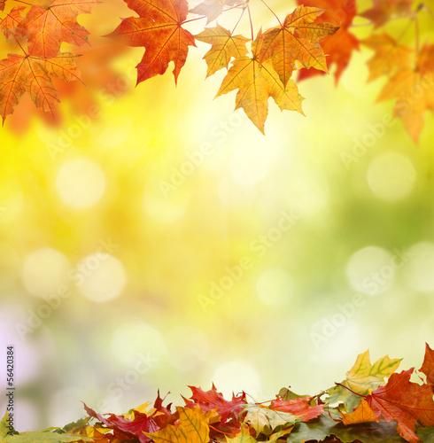 jesien-w-swietle-slonecznym