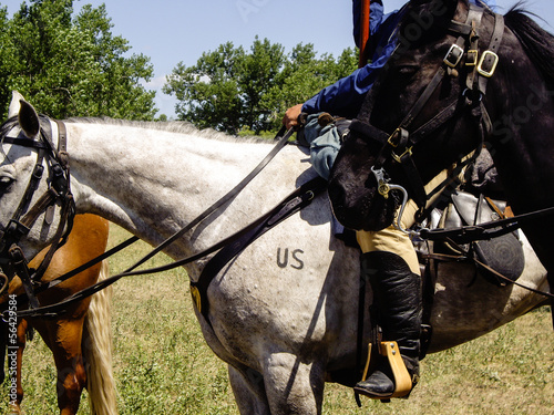 US Cavalry Horse - Buy this stock photo and explore similar images
