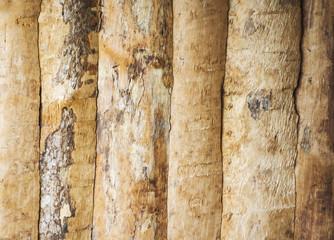 Fototapeta Light Browny Bark Wall