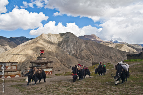 Staande foto Nepal Mountain landscape and caravan of yaks in Dolpo, Nepal
