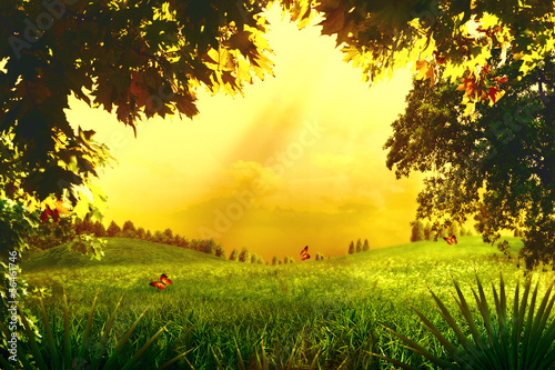 Fototapeta Magic Forest. Abstract environmental backgrounds for your design obraz na płótnie